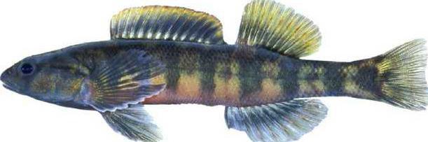 0728Wildlife-fish3