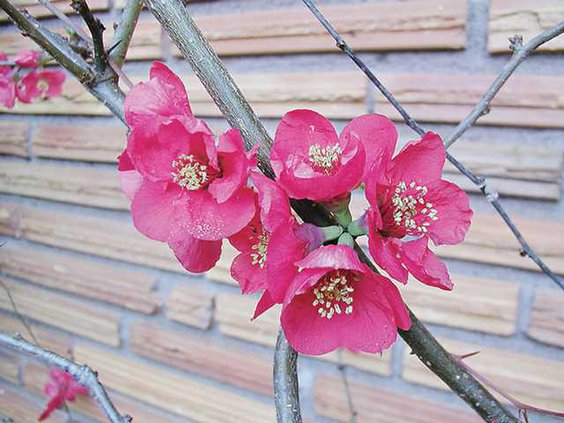 0321England-Quince