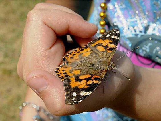 0516butterflies4