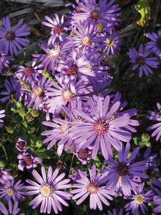 0517aster