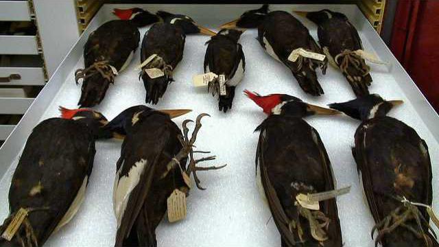 0125Ghost Bird 01