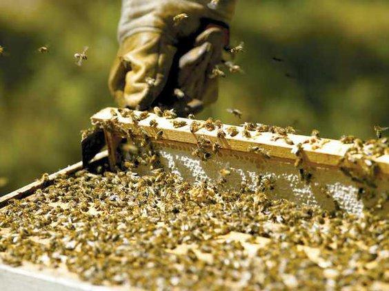 0220-GO-Beekeeping
