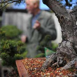 Plant City Bonsai Hits Its 30th Anniversary In Business Gainesville Times