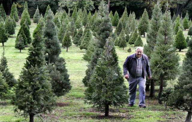 BIZ CHRISTMASTREES-FARMS QC
