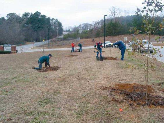 0109-GO-treeplanting