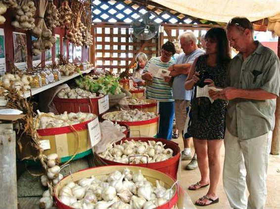 0821-GO-GarlicFest-1