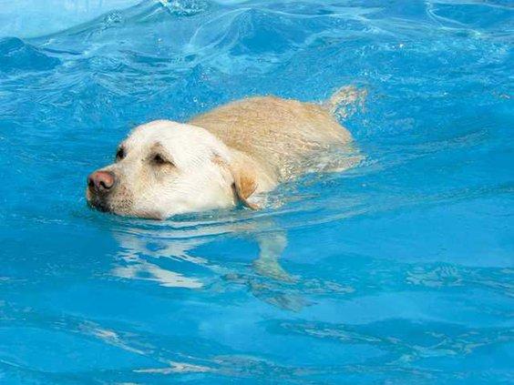 0905-GO-Dog-in-pool