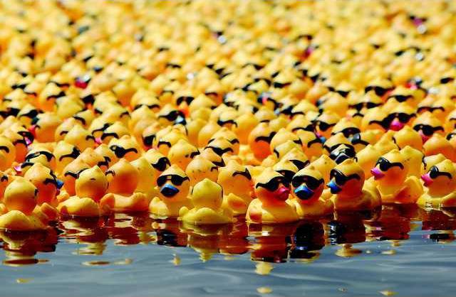 GO duck3