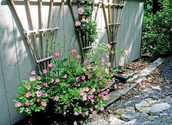 Gardening Arbor Plant boae