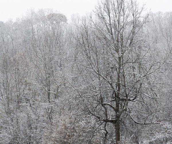 12092017 SNOW 0001.jpg