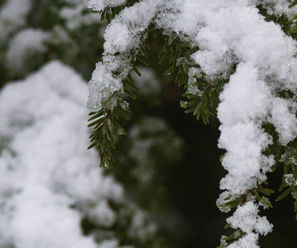 12092017 SNOW 9.jpg