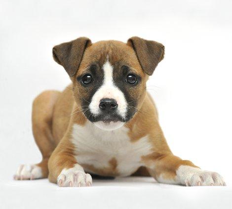 0225SHELTER.DOG