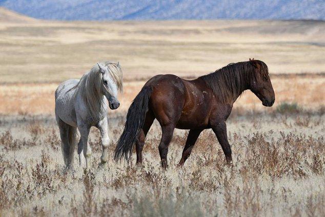 04032018 BRF horse.jpg