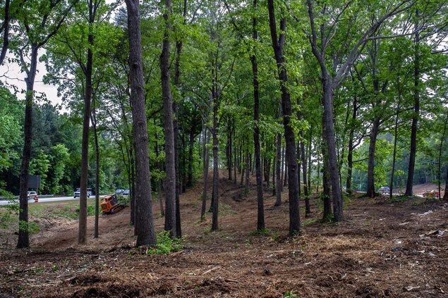 05052019 TREES 1.jpg