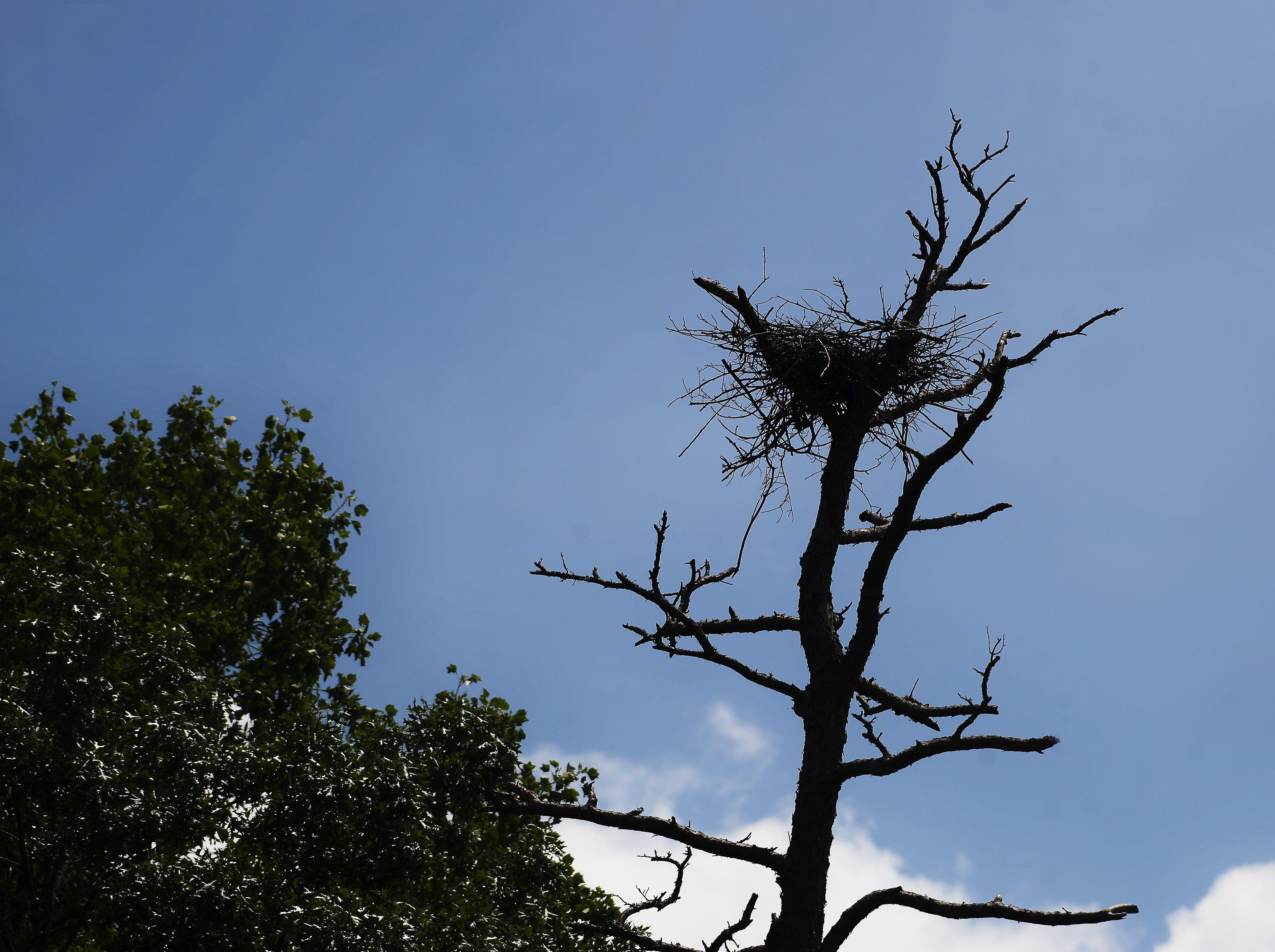 Ospry Nest 1.jpg