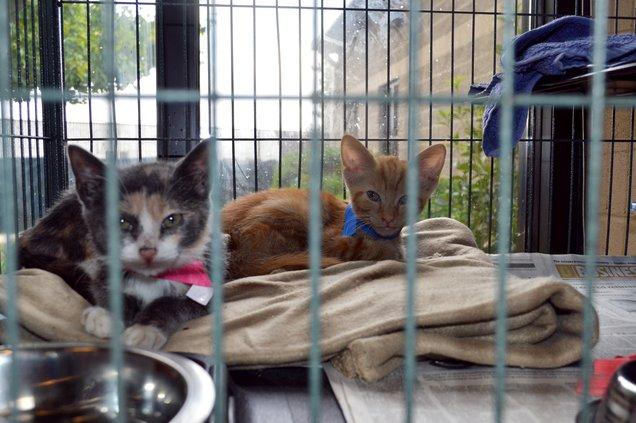 10032019 CATS 3.jpg
