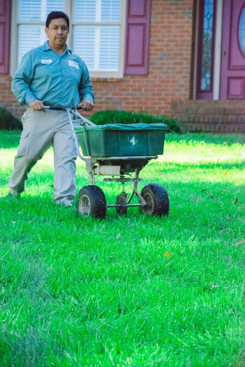 overseed your lawn