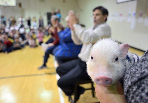 11222019 PIG 3.jpg