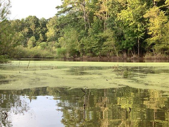 algae 2019