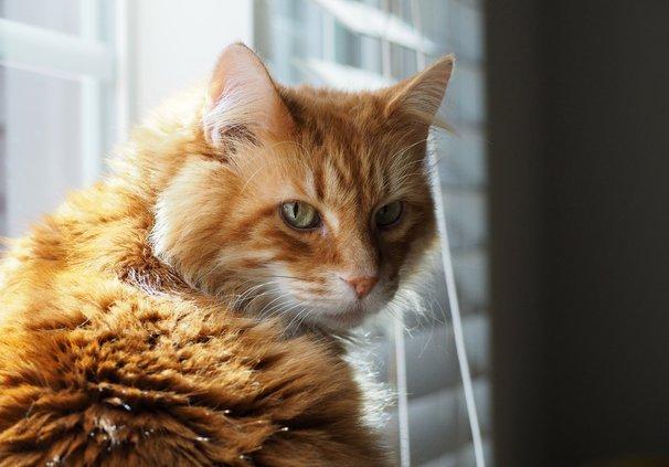 04242020 CATS 1
