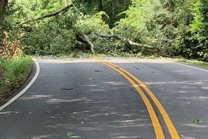Trees and power lines down in area of Morningside and Riverside drives