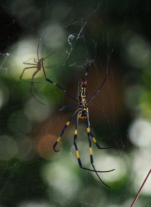 10082020 SPIDER.jpg