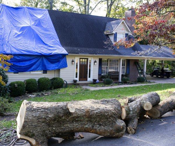 11042020 TREE 1.jpg