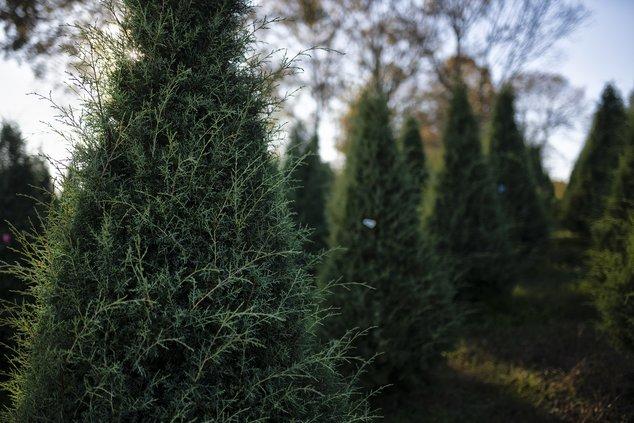 11272020 TREES 12.jpg