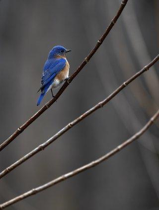 02272021 BIRDS 3.jpg