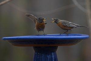 02272021 BIRDS 1.jpg