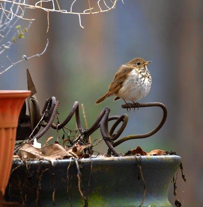 02272021 BIRDS 2.jpg